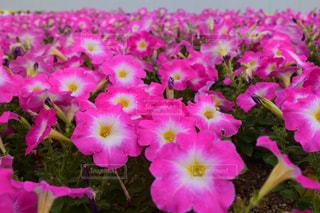 花のクローズアップの写真・画像素材[2205448]