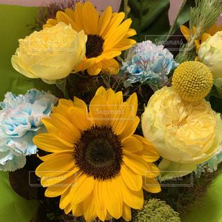 黄色い花のクローズアップの写真・画像素材[2224627]