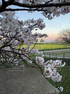 花園のクローズアップの写真・画像素材[2224631]