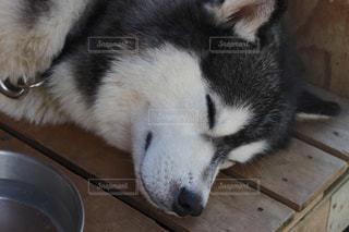犬の写真・画像素材[122405]