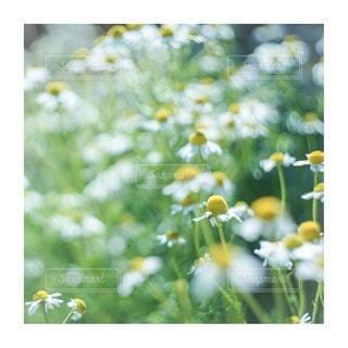 花をクローズアップするの写真・画像素材[2856640]