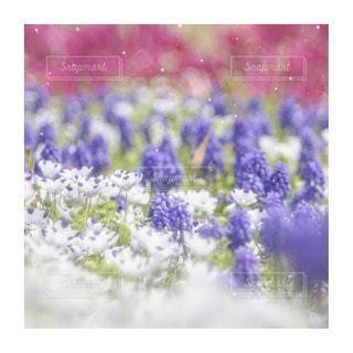 花をクローズアップするの写真・画像素材[2856634]