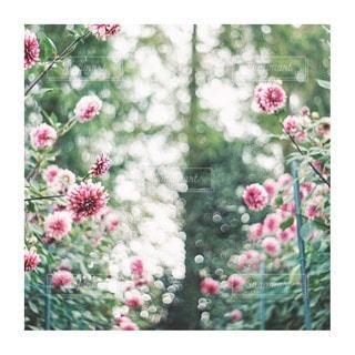 花をクローズアップするの写真・画像素材[2856639]