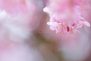 花のクローズアップの写真・画像素材[3042858]