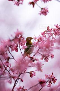 花のクローズアップの写真・画像素材[3042860]