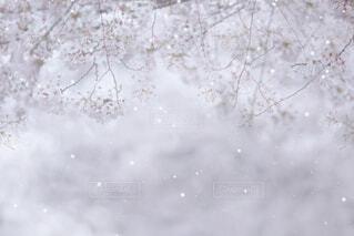 雪に覆われた畑のクローズアップの写真・画像素材[4317185]