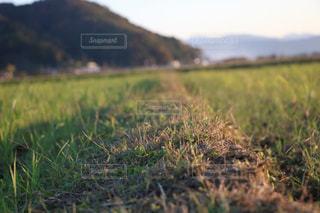 緑豊かな野原のクローズアップの写真・画像素材[2233569]