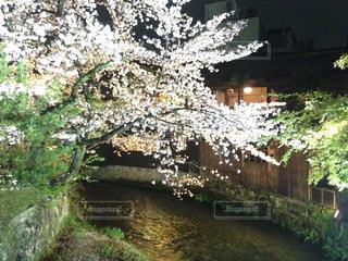 夜桜🌸の写真・画像素材[2212209]