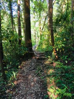 吾妻峡へ向かう林の道の写真・画像素材[2216606]
