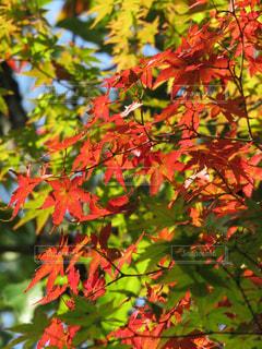 色づく秋の写真・画像素材[2208078]