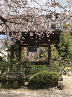 桜と鐘の写真・画像素材[2208843]