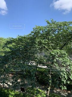 木のクローズアップの写真・画像素材[2209023]