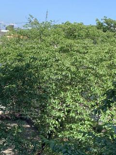 森の中の緑の植物の写真・画像素材[2209024]