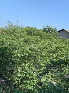 森の中の大きな緑の木の写真・画像素材[2209025]