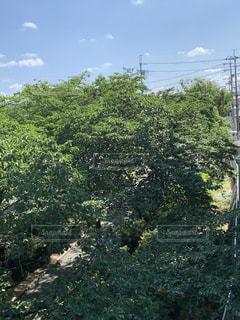 森の木の写真・画像素材[2209026]