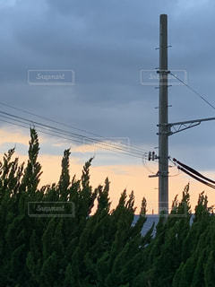 背の高い木の群しの写真・画像素材[2211091]