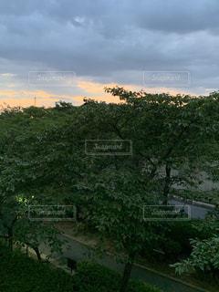 大きな木の写真・画像素材[2211093]