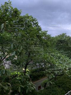 木のクローズアップの写真・画像素材[2211095]