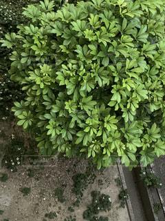 庭の緑の植物の写真・画像素材[2211099]