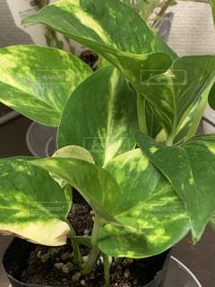 緑の植物のクローズアップの写真・画像素材[2222235]