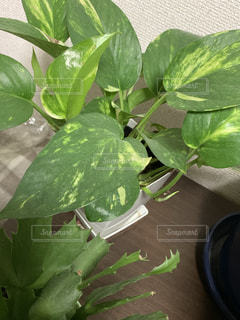 緑の植物のクローズアップの写真・画像素材[2222237]