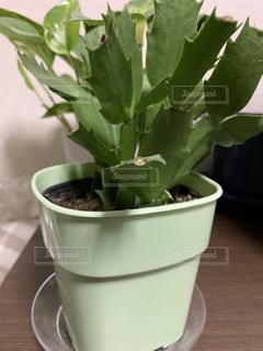 緑の植物の写真・画像素材[2222238]