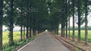 並木道の写真・画像素材[87385]