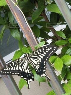 蝶の一休みの写真・画像素材[2253609]