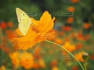 花と蝶々の写真・画像素材[2210894]