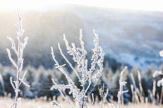 小さな樹氷の写真・画像素材[2210695]