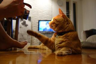 猫の写真・画像素材[155988]