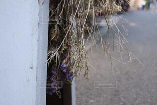 枯れ木の写真・画像素材[2214372]
