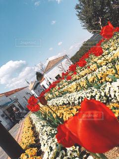 大きな赤い傘の写真・画像素材[2218302]