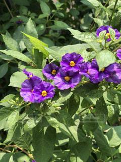 花のクローズアップの写真・画像素材[2232734]