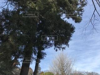 大きな木のある風景の写真・画像素材[2223680]