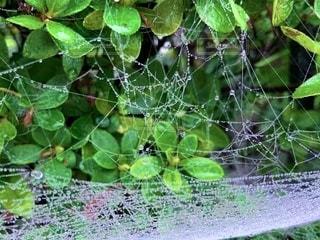 霧の朝の蜘蛛の巣の写真・画像素材[2725218]