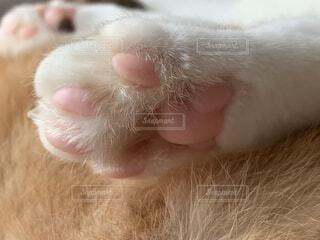猫の肉球の写真・画像素材[3709988]