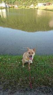 犬 - No.88499