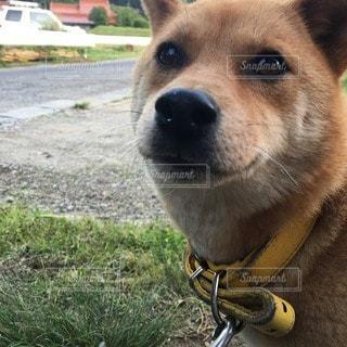 犬の写真・画像素材[88513]