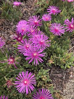 花の写真・画像素材[2240706]