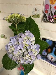 屋内の切り花の写真・画像素材[2231052]
