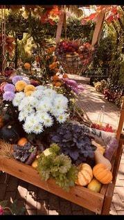 ワゴンの中の秋の写真・画像素材[2811346]
