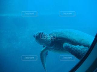 ウミガメの写真・画像素材[2236480]