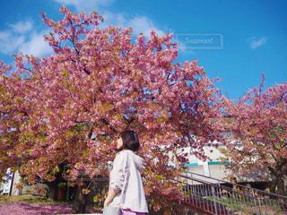 桜の写真・画像素材[2993315]