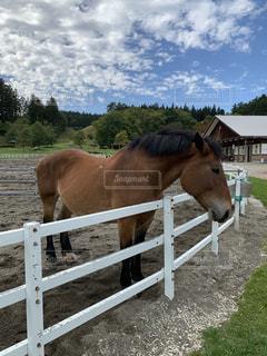 お馬さんの写真・画像素材[2621185]