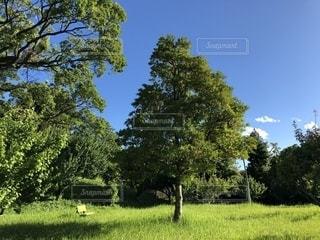 草原と青空とベンチの写真・画像素材[2222357]