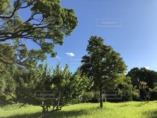 草原の木の写真・画像素材[2222370]