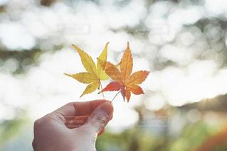 秋探し。の写真・画像素材[2448953]