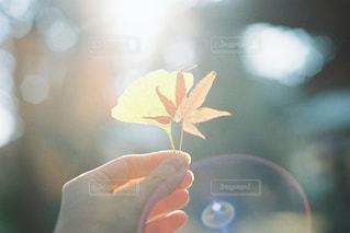 秋集めましたの写真・画像素材[2465095]