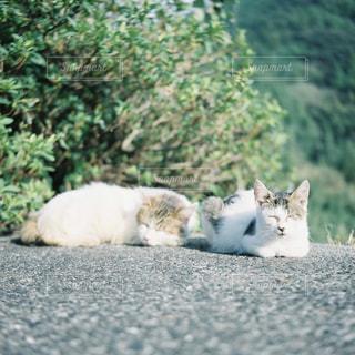 ネコの写真・画像素材[2759622]